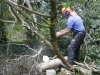Tree surgery Pembrokeshire