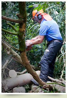 Tree services Pembrokeshire