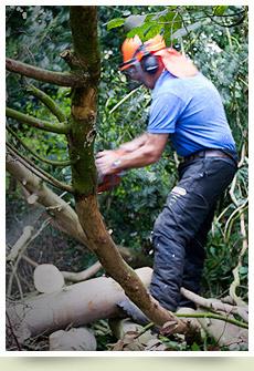 Tree services Pembrokeshire